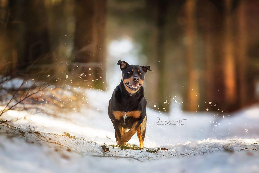 Amy im Schnee am Brandrüttel