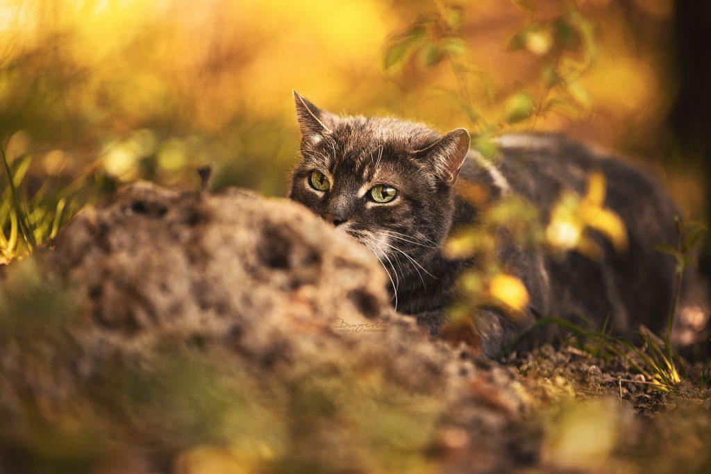 Katze auf der Lauer, Katze im Unterholz