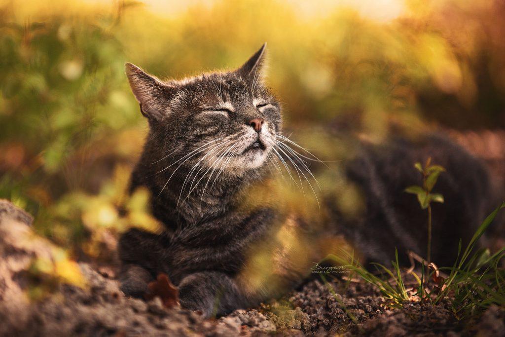 Den Moment genießen, Katze in der Sonne