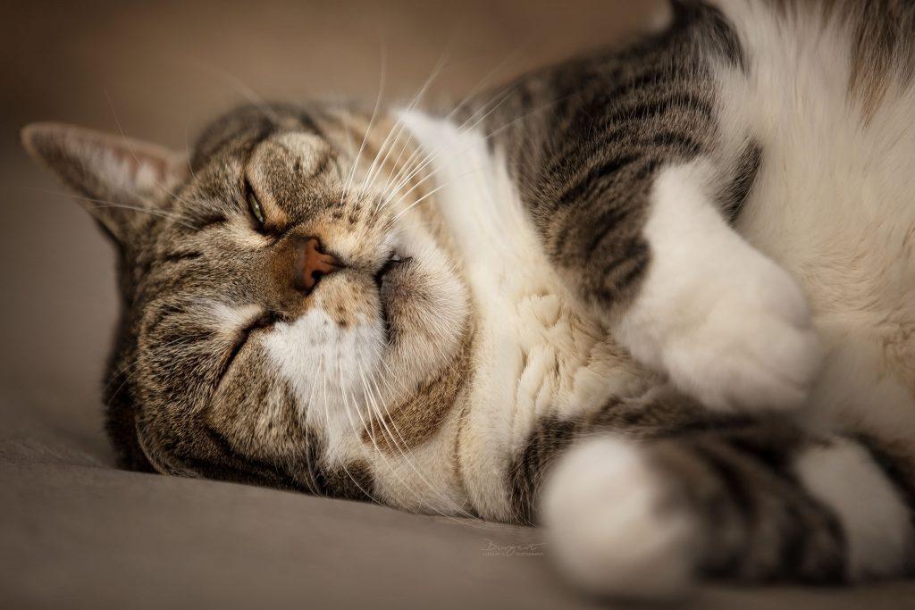 Grumpy Cat, Schlafende Katze