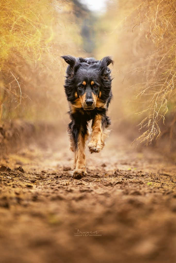 Hund im Spargelfeld
