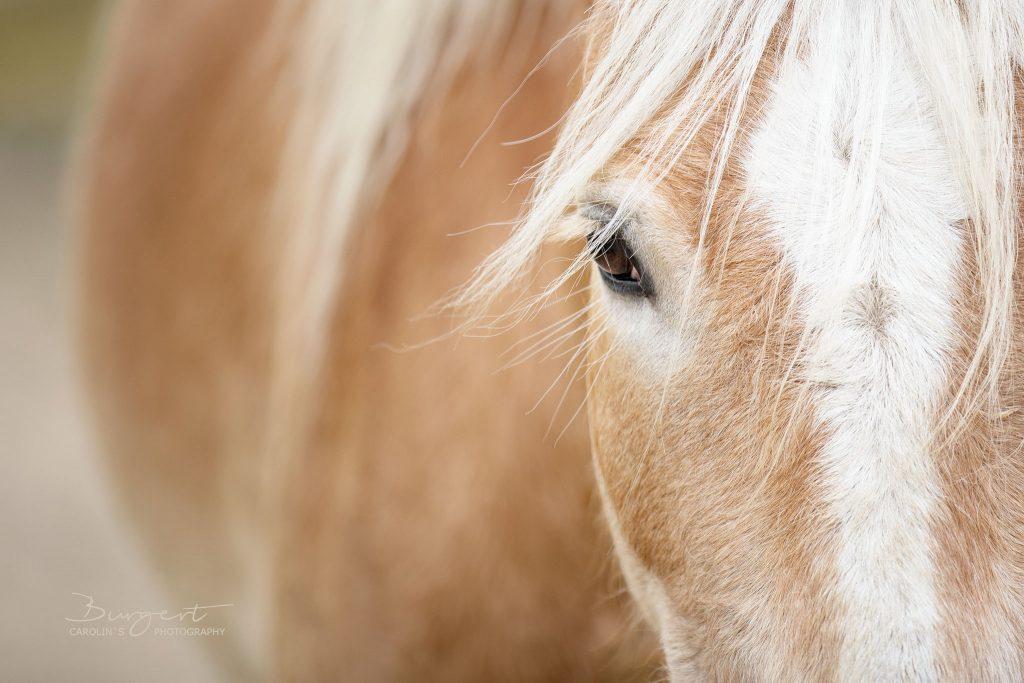 Im Auge des Pferdes erkennst Du seinen Charakter