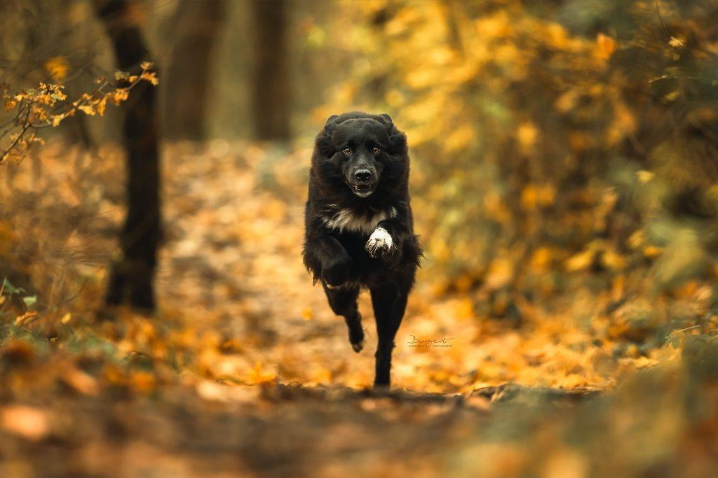 Actiondog im Herbstwald