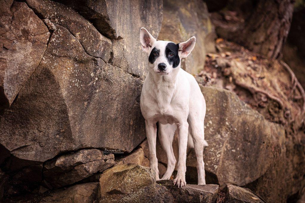 Hundeshooting im Steinbruch