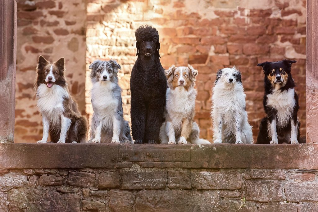 Die Gang :-)