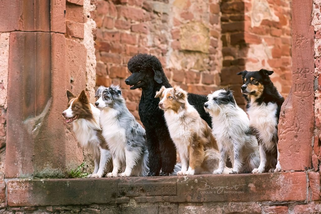 Zoom, Melody, Fussel, Leela, Kira & Jack
