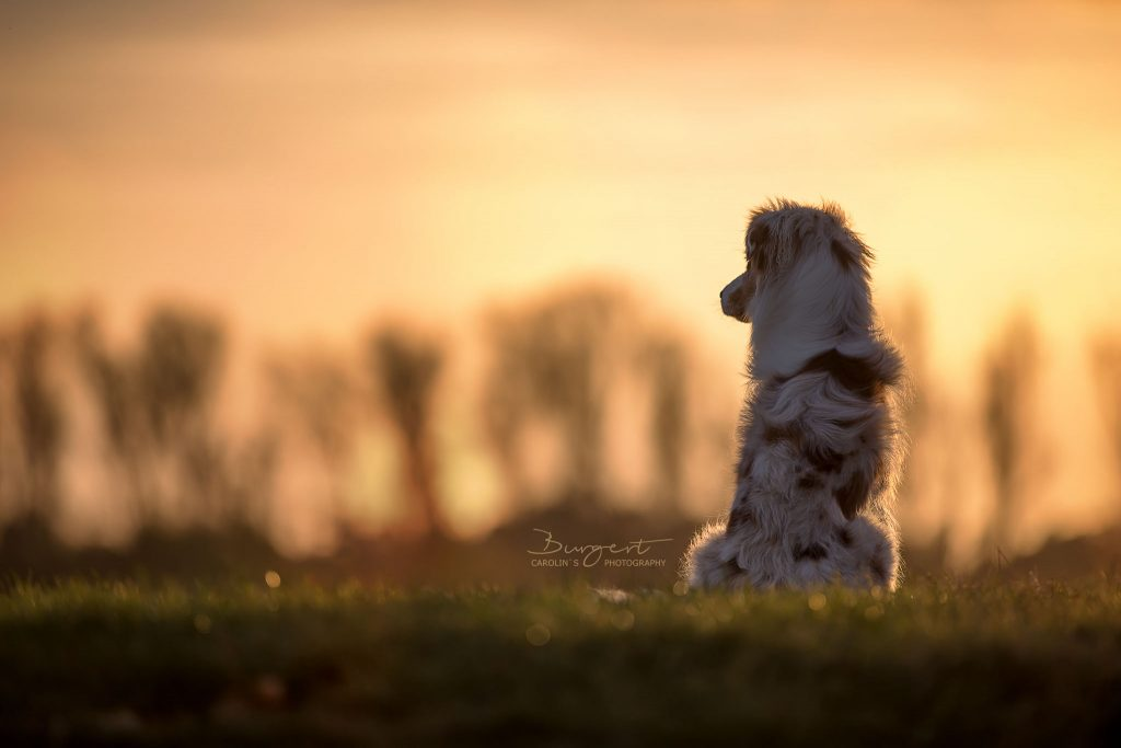 Wickie im Sonnenuntergang