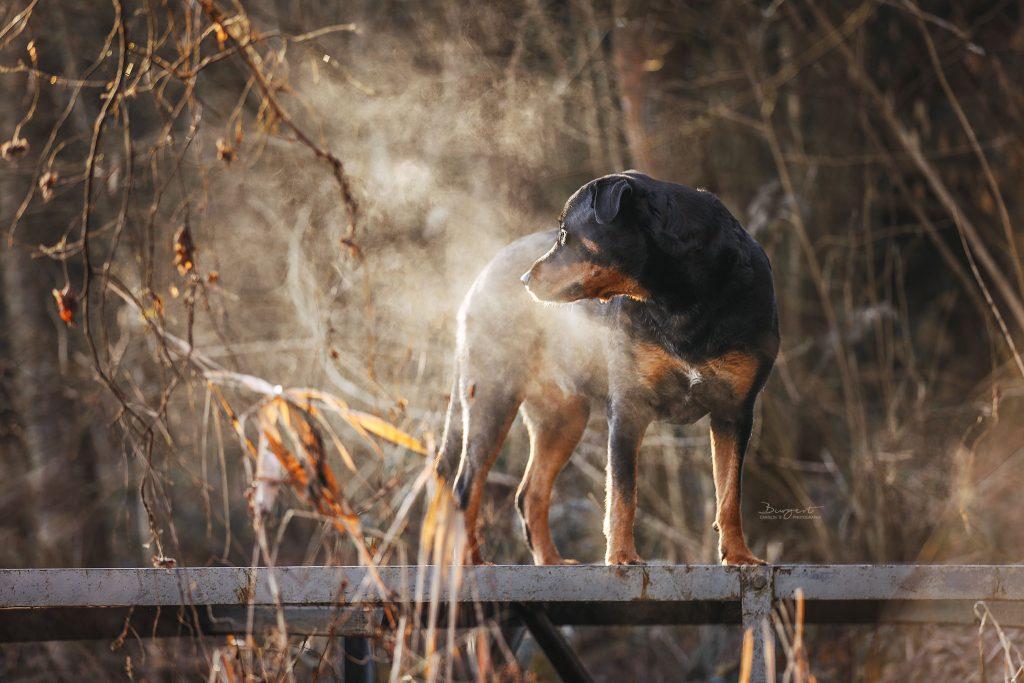 Hund im Nebel am See