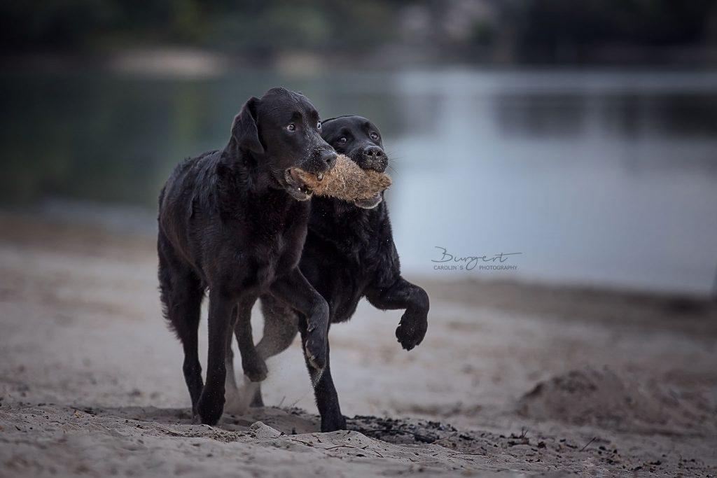 Beste Freunde teilen