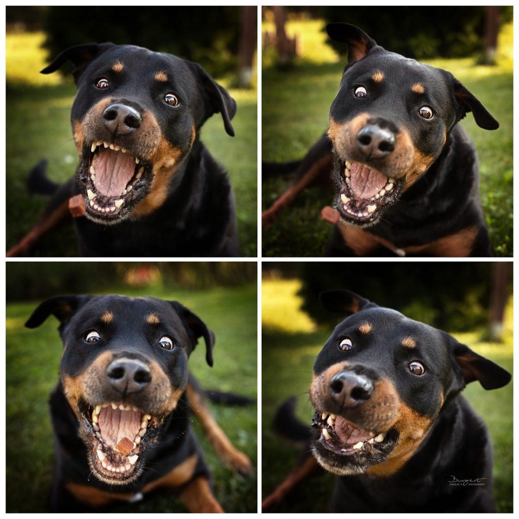 Hund schnappt Leckerlie