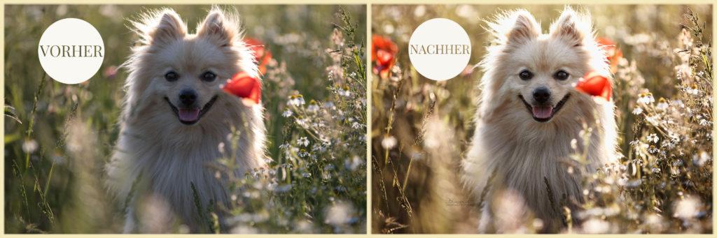 Vorher/Nachher Vergleich Fotografie, Photoshop