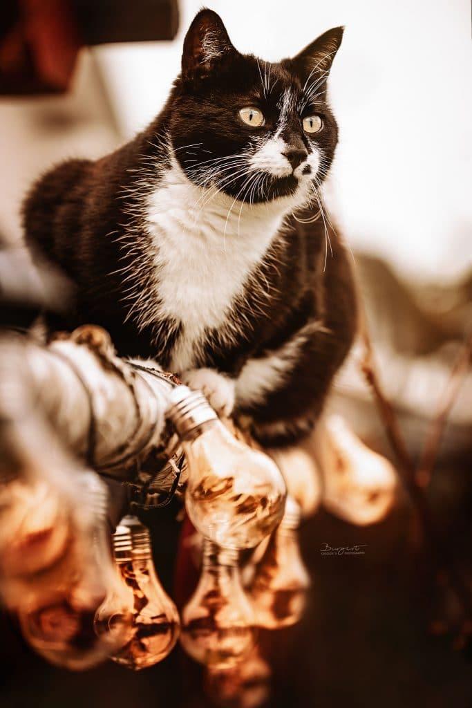 Schwarzweisse Katze im Garten