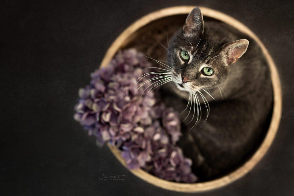 Katzenfotografie,
