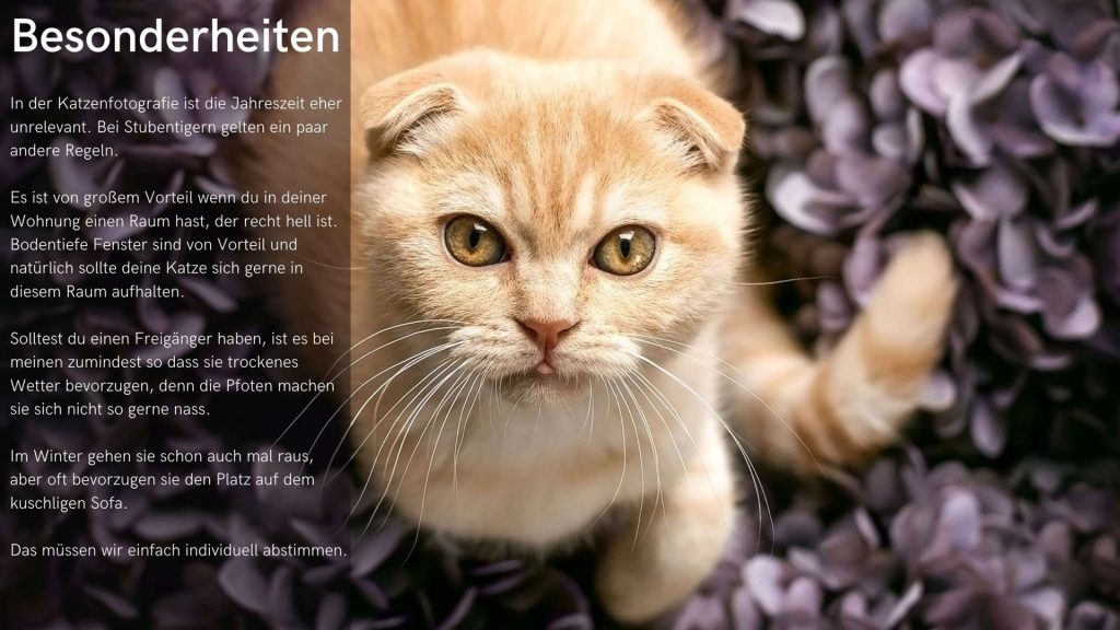 Title-and-Body-Page_katze_hp